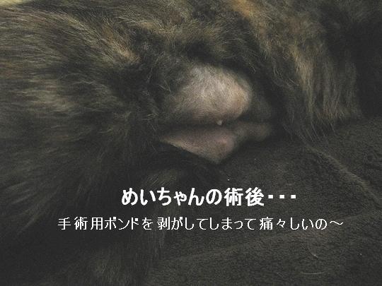 めいちゃん.jpg
