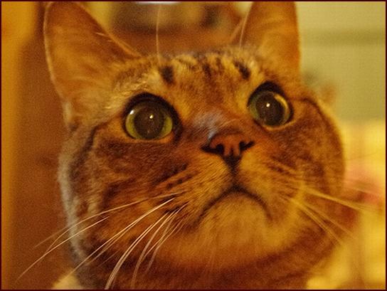 猫の丸顔.jpg