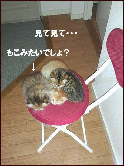 みーやの子?.jpg