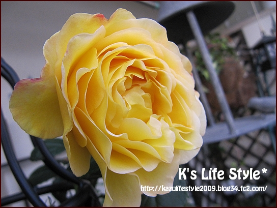 大きな花が咲きました.jpg