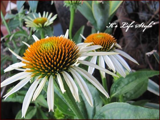 夏の花.jpg
