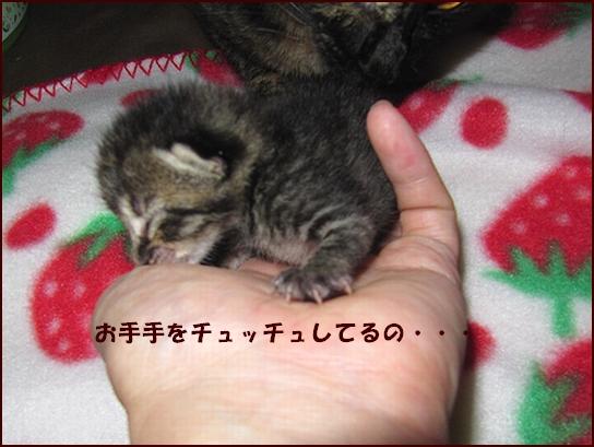 うみちゃん2.jpg