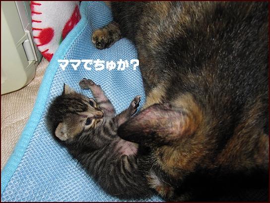 ママ気分.jpg