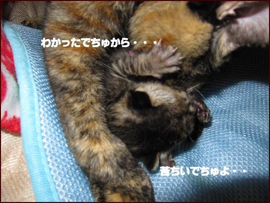 ママ2.jpg