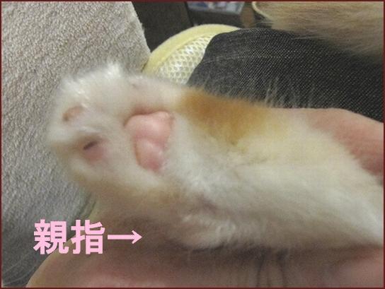 足の指.jpg
