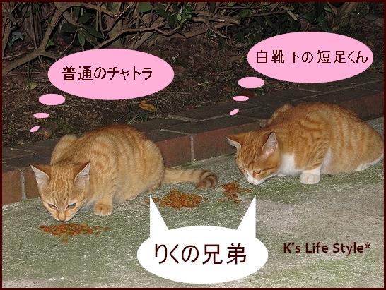 りくの兄弟.jpg