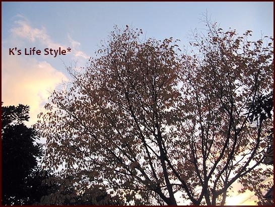 秋の公園.jpg