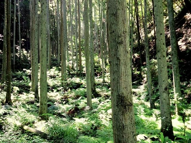 木漏れ日-2_R