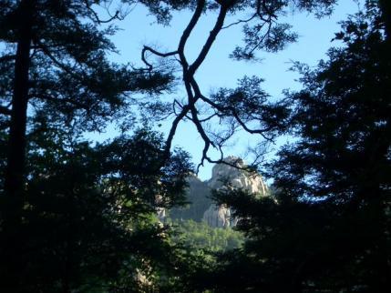 樹間から山頂方向が
