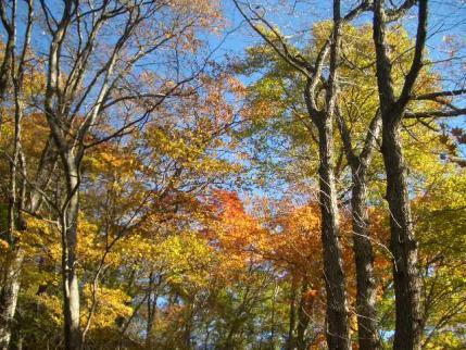 紅葉の登山道1