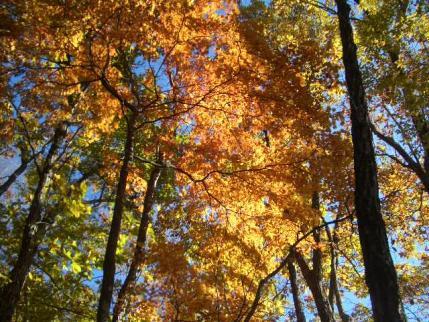 紅葉の登山道2