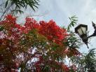 石段街の紅葉1