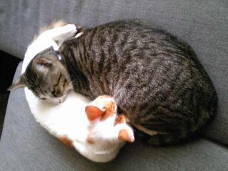 きなひじ寝る