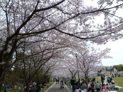 神戸ライフ:さくらまつり2012
