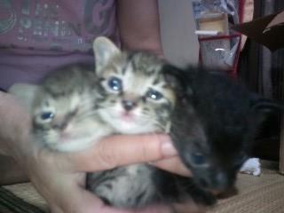 子猫たち1