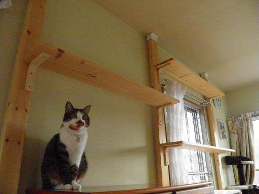 壁猫タワー