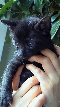 子猫オス黒