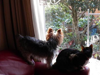 窓辺の二人1