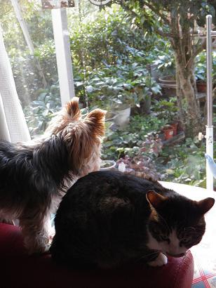 窓辺の二人2
