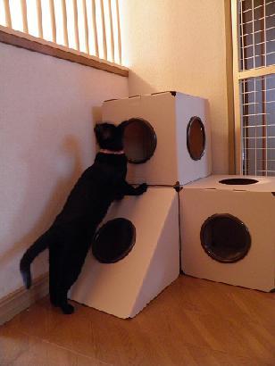 猫box02