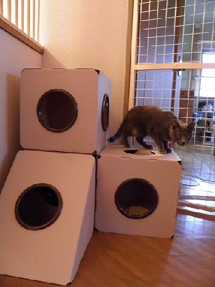 猫box01