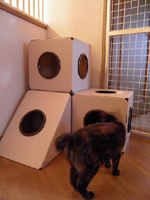 猫box03