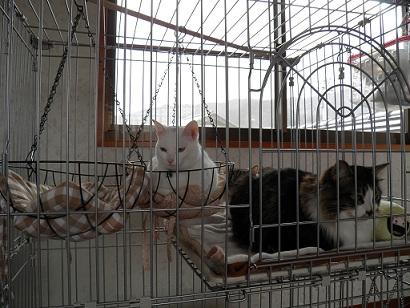 t-cat3.jpg