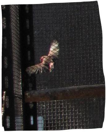 fly-4.jpg