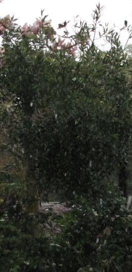 hails12-0416.jpg