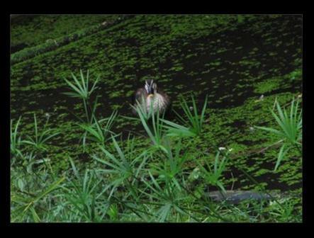 karusama201210.jpg