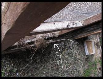nest-DD1.jpg
