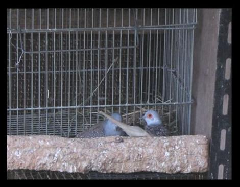 nest-DD4.jpg
