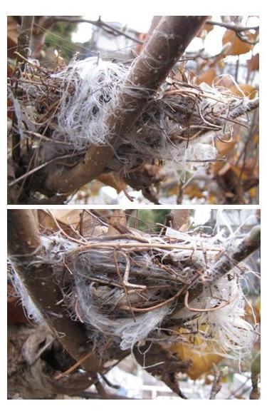 nest5.jpg