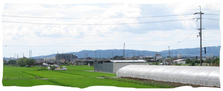 nisimuki1.jpg