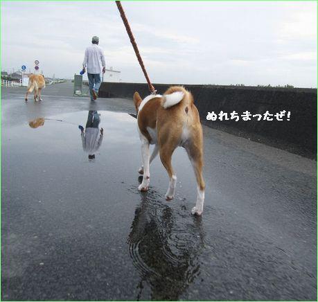 はなケン楽しくお散歩です。