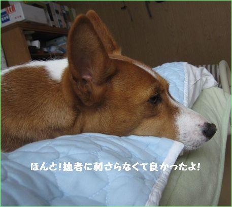 明日神奈川に行くのよ。