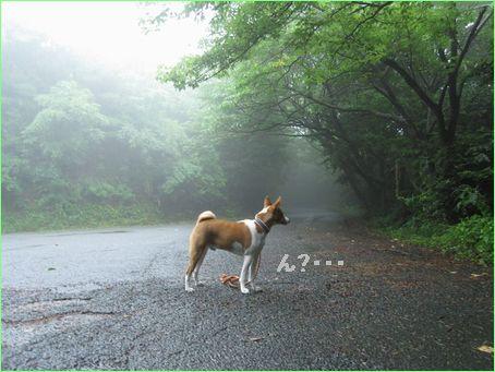 霧が深い山の道・・