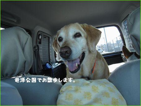 車で公園に行きます。