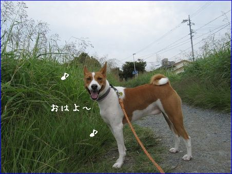 畑に大根・白菜・ほうれん草・ニンジン・・