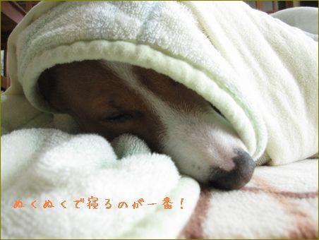 いつも寝てるけど・・今日も寝ています。