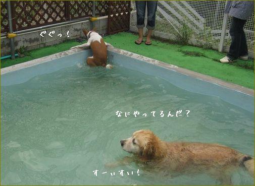 プールのあるドッグランに行ったよ。