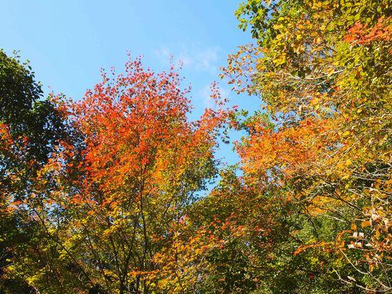 ここだけ紅葉。