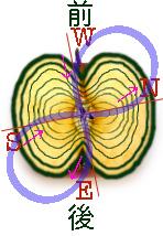 松果体階層図
