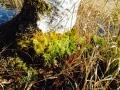 苔のグラデーション