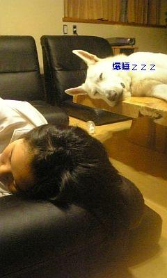 レオンと爆睡