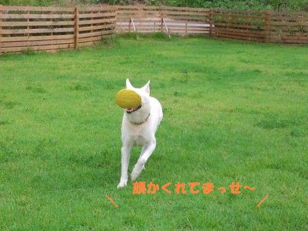 2_20110920153250.jpg