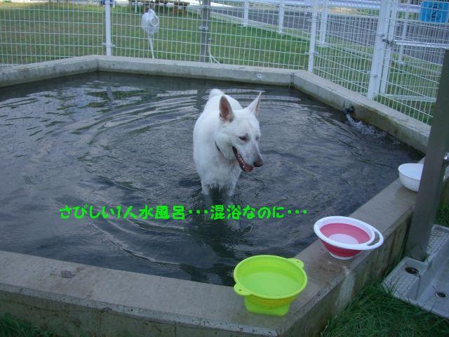 3_20100921124616.jpg