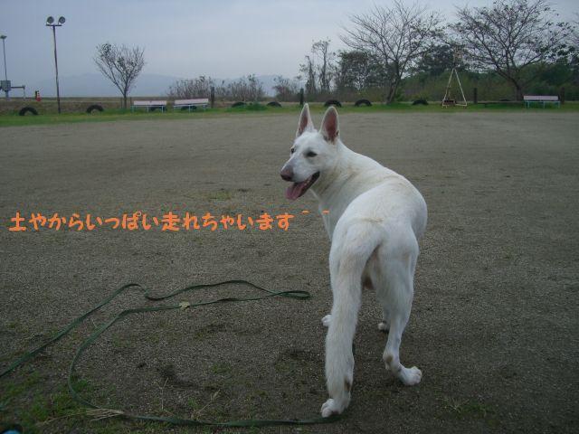 4_20101115151102.jpg