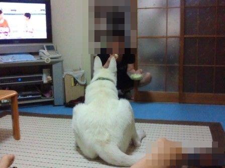 4_20110912165852.jpg