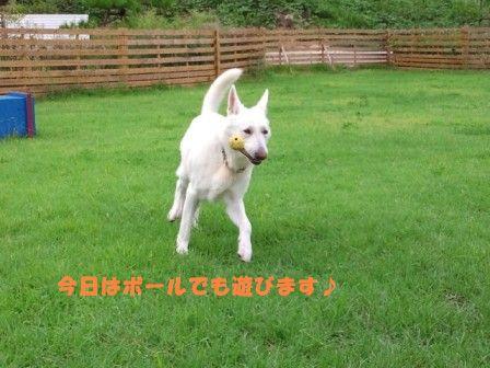 4_20110920153248.jpg
